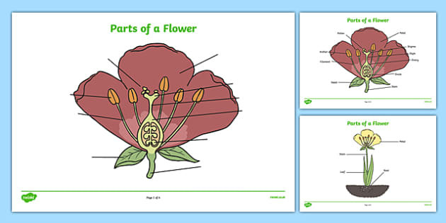 Parts of a Plant and Flower Labelling Worksheet - parts of a