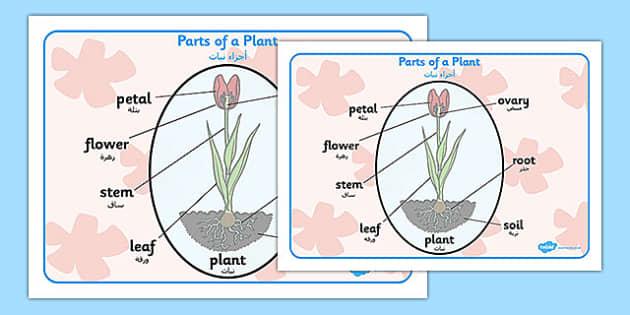 Parts of a Plant Word Mat Arabic Translation - arabic, parts of a plant, word mat, word, mat, parts, plant