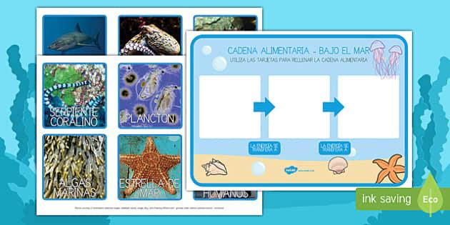 la cadena alimentaria bajo el mar ficha de clasificar