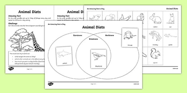 Animal Diets Activity Sheet - amazing fact a day, activity, activities, animal, diets, worksheet