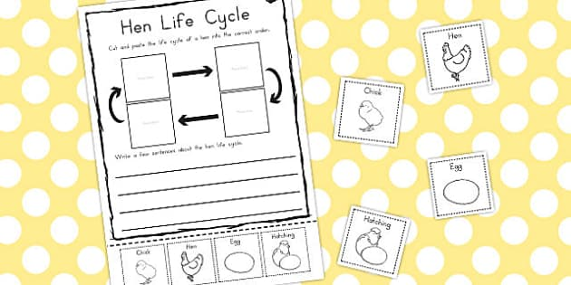 Hen Life Cycle Sentence Writing Activity Sheet - australia, cycle, worksheet