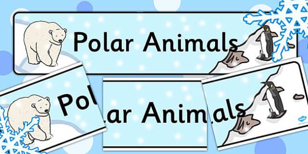 Polar Animals Display Banner - banners, displays, poster, animal