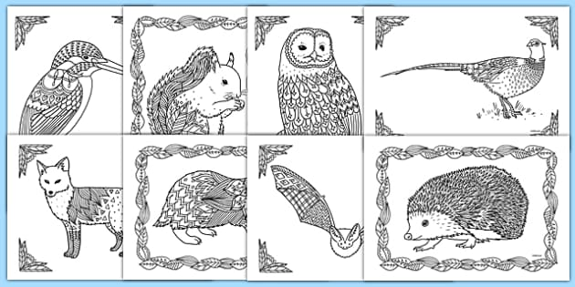 British Wildlife Mindfulness Colouring Sheets - british wildlife, mindfulness, colouring, colour, british, wildlife