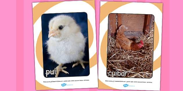 Ciclul de viață la găină - Cartonașe cu fotografii și cuvinte