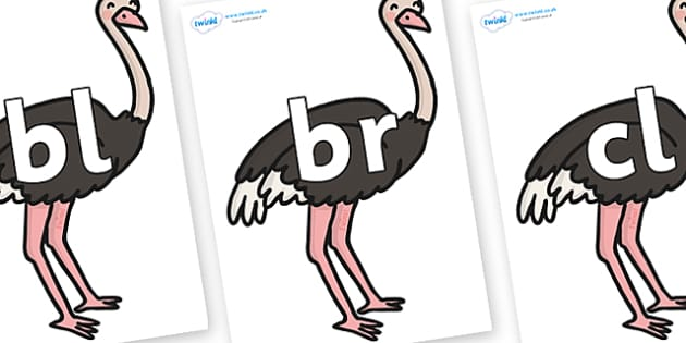 Initial Letter Blends on Ostriches - Initial Letters, initial letter, letter blend, letter blends, consonant, consonants, digraph, trigraph, literacy, alphabet, letters, foundation stage literacy