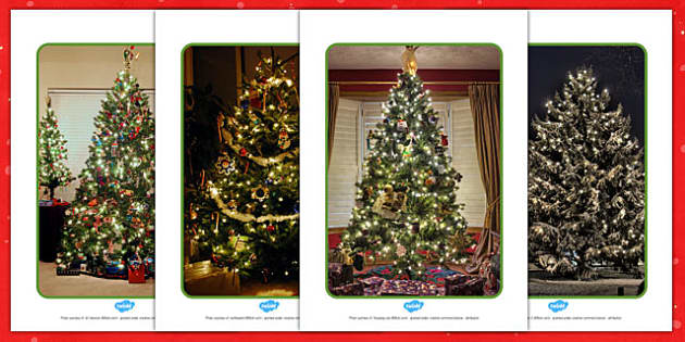 Christmas Tree Display Photos - display, photos, christmas, tree