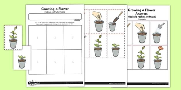 Activity Sheet Growing a Flower Polish Translation - polish, activity sheet, growing, flower, worksheet