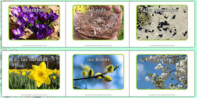 Fotos sobre La Primavera - spanish, Spring, seasons, photo, display photo, lambs, daffodils, new life, flowers, buds, plants, growth