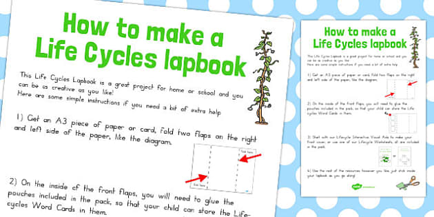 Life Cycles Lapbook Instruction Sheet - australia, lapbook, life