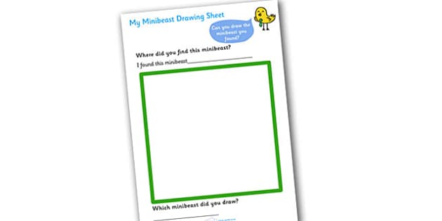 My Minibeast Drawing Worksheet - minibeast investigation, finding minibeasts, describing minibeasts, Minibeasts, Topic, Foundation stage, knowledge and understanding of the world, investigation, living things, snail, bee, ladybird, butterfly, spider