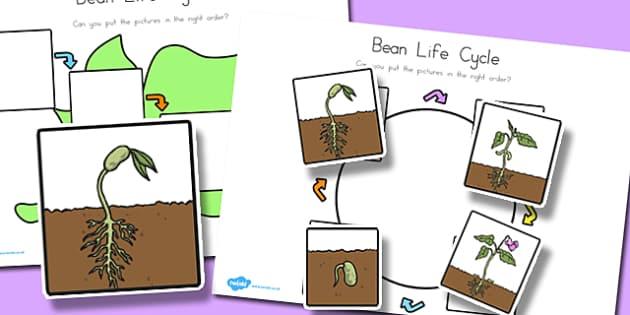 Bean Lifecycle Worksheets - australia, bean, life cycle, sheet
