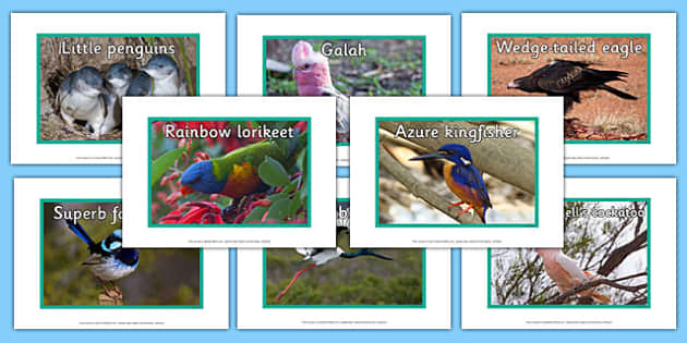 Australian Birds Display Photos - australia, animals, birds, display photos, display