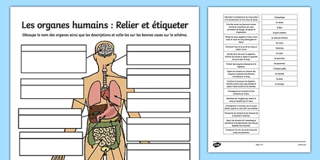 Les organes humains : Relier et étiqueter Human Organ Matching and Labelling Activity French - french, human organ, matching, labelling, activity