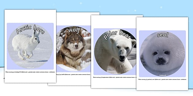 Arctic Animal Display Photo Cut Outs - arctic, animal, cut outs
