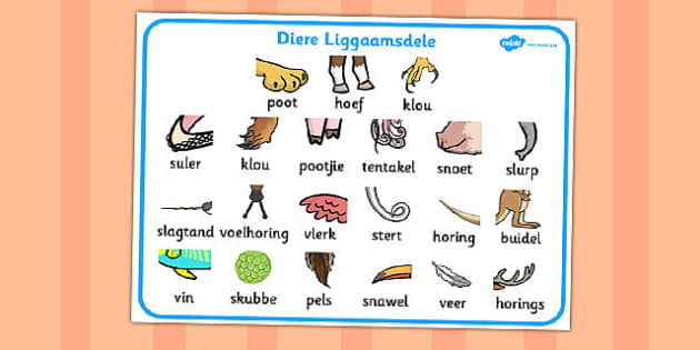 Afrikaans Animal Body Parts Word Mat - afrikaans, animal, mat
