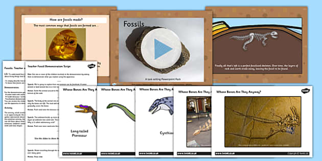 Fossils and Evolution Year Task Setter Powerpoint Activity Pack