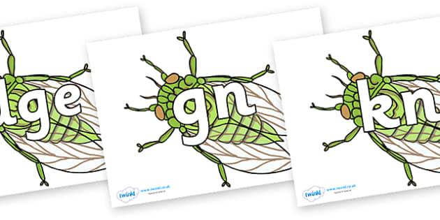 Silent Letters on Cicada - Silent Letters, silent letter, letter blend, consonant, consonants, digraph, trigraph, A-Z letters, literacy, alphabet, letters, alternative sounds