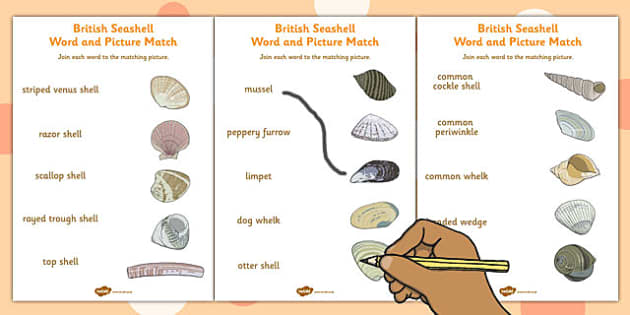 British Seashell Word and Picture Matching Worksheets - matching