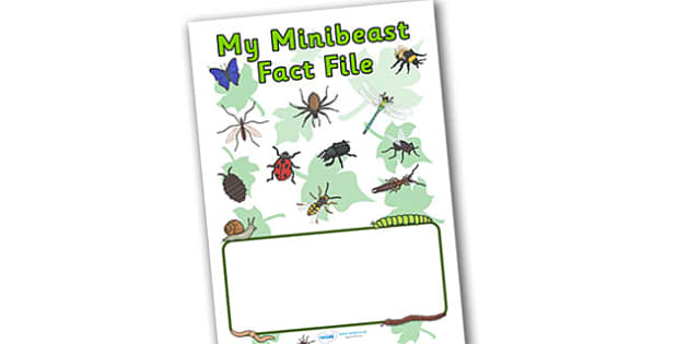 My Minibeast Fact File Book Cover - book cover, fact file, minibeast facts, minibeast, fact file cover, fact book, minibeast fact file, minibeast fact book
