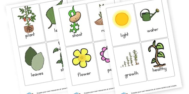 Plants Vocabulary Cards - Plants & Growth Primary Resources, flowers, grow, planting, garden