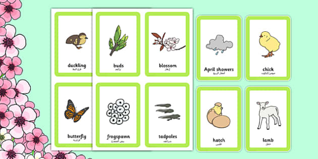 Spring Pairs Matching Game Arabic Translation - arabic, games, match, activity, activities