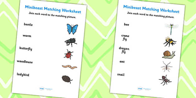 Minibeast Word and Picture Matching Worksheets - minibeast