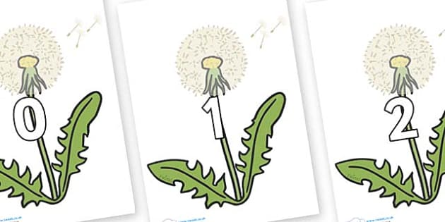 Numbers 0-31 on Dandelion Seeds - 0-31, foundation stage numeracy, Number recognition, Number flashcards, counting, number frieze, Display numbers, number posters