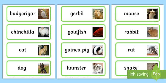 Pets Topic Word Cards - Word Card, flashcard, flashcards, Pets, Pet, rabbit, cat, dog, hamster, gerbil, rat, chincilla, mouse