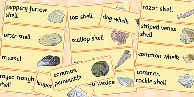 British Seashell Word Cards - british, seashell, word cards, card