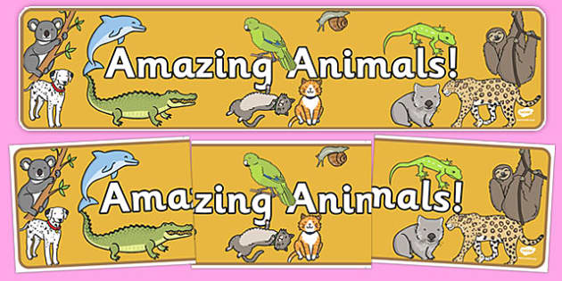 Amazing Animals Display Banner - amazing animals, display banner, display, banner, amazing, animals