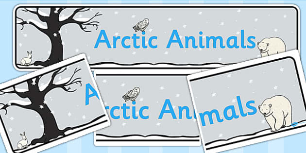Arctic Animals Display Banner - banners, displays, poster, animal