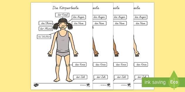 Die Körperteile Head and Shoulders A4 German - german, parts, body, head, shoulders