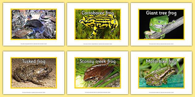 Australian Amphibians Display Photos - australia, animals, amphibians