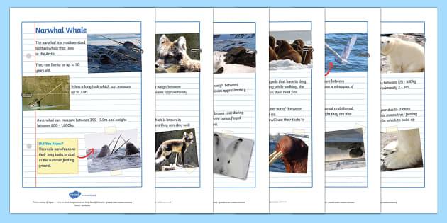 Polar Animals Factfile Sheets - factfile, facts, facts about, polar animals, animals, polar, arctic animals, antarctic animals, facts about animals, habitats, fact sheets, factfile sheets, information