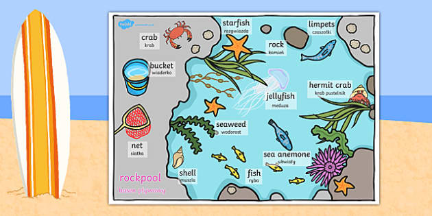 Seaside Rockpool Word Mat Polish Translation - polish, seaside