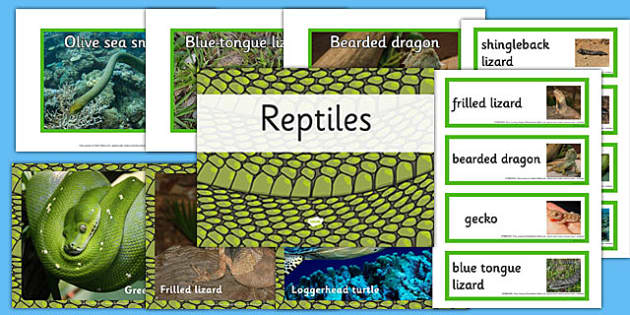 Australian Reptiles pack - australia, reptiles, pack, animals