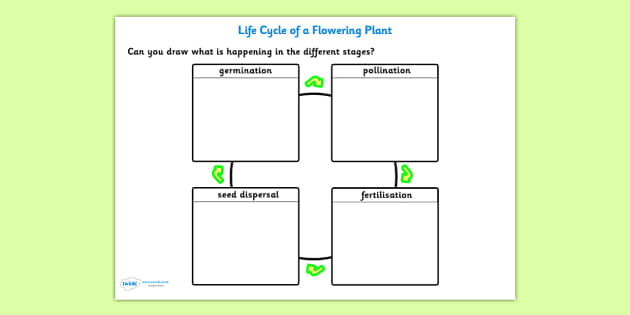 Pollination, Fertilisation, Seed Dispersal and Germination Worksheet - pollination, fertilisation, seed dispersal, germination, living things, flowers
