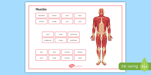 Muscles Word Mat