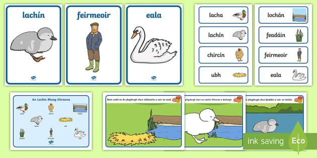 The Ugly Duckling (An Lachín Bheag Ghranna) Resource Pack Gaeilge - lacha, locháin, eala, irish, finscéal