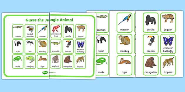 Guess the Jungle Animal Guess Who Game - guess the jungle animal, jungle, guess, animal, guess who, game, activity