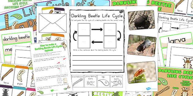 Darkling Beetle Life Cycle Lapbook Creation Pack - australia