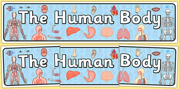 The Human Body Display Banner - ourselves, body, science, header