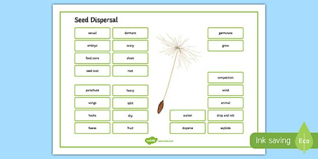 Seed Dispersal Word Mat