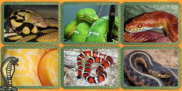 Snake Patterns Display Photos - animals, animals display, photo