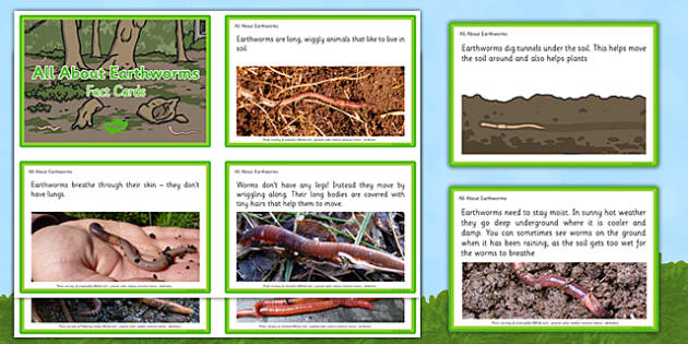 All About Earthworms Fact Cards - EYFS, Early Years, minibeasts, creepy crawlies, garden, understanding the World