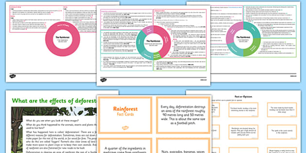 Rainforest Resource Pack - cfe, curriculum for excellence, rainforest, resource pack, pack