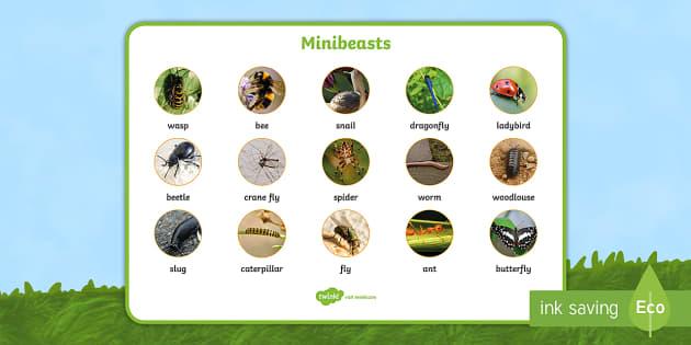 Minibeasts Photo Word Mat - minibeast, visual aid, insect, animal