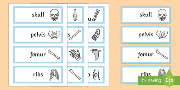 Bones of the Body Word Cards - bones, bone, bones of the body, body, body parts, word cards, words, cards