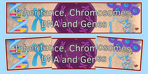 Inheritance, Chromosomes, DNA and Genes Display Banner - inheritance chromosomes dna and genes, ks3, biology, display banner
