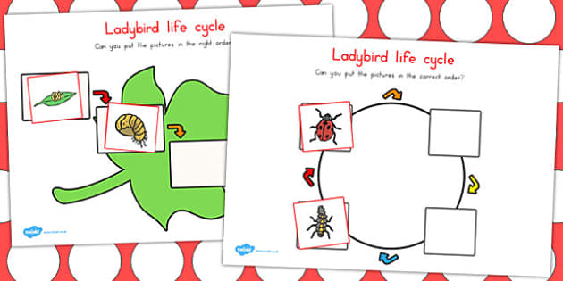Ladybird Life Cycle Worksheets - life cycles, lifecycle, sheets